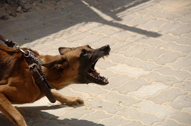 dog, attack, aggressive