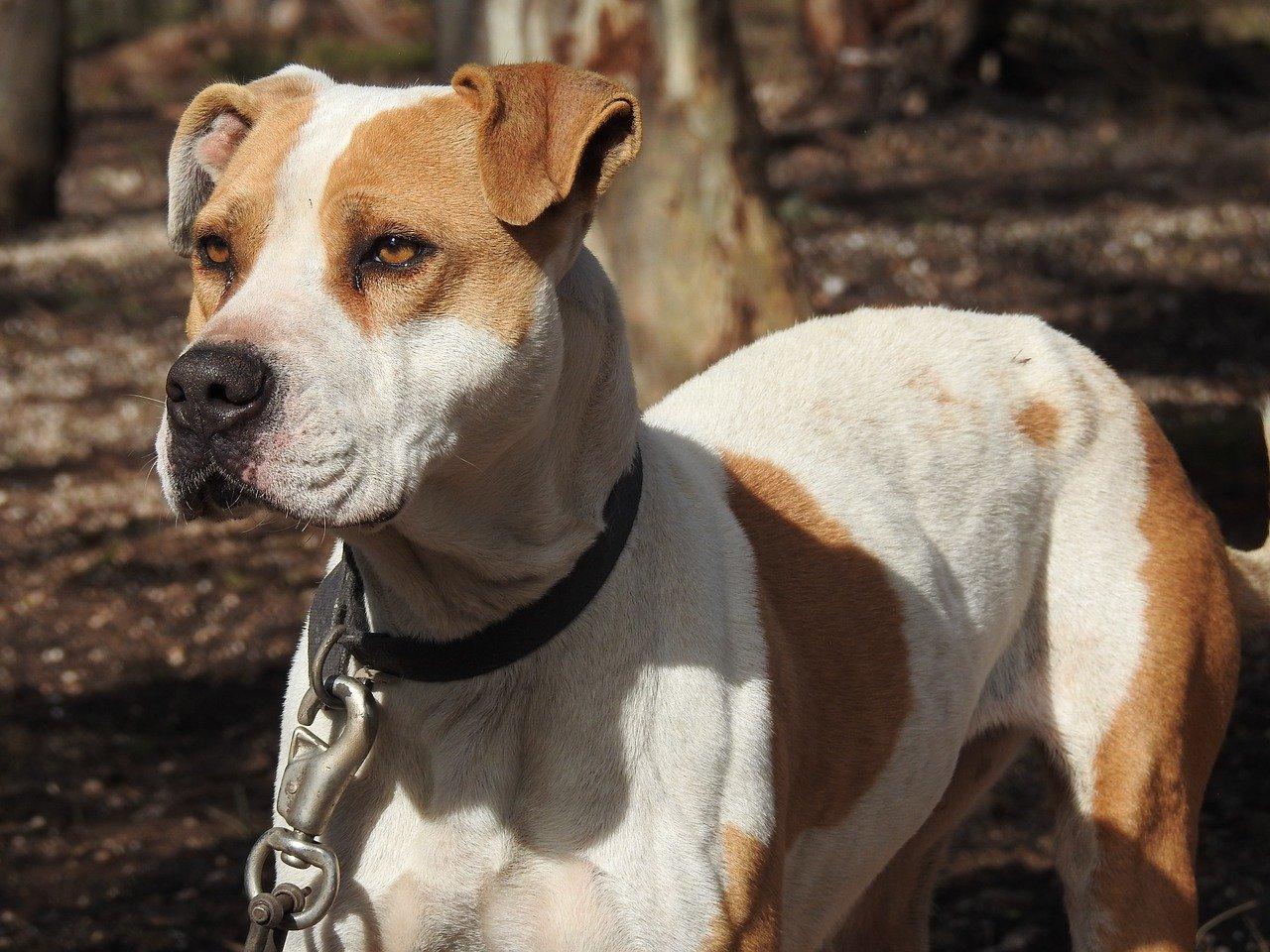 dog, canine, poised